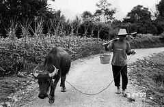 chinese-farmer