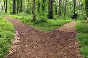 two-path-trail