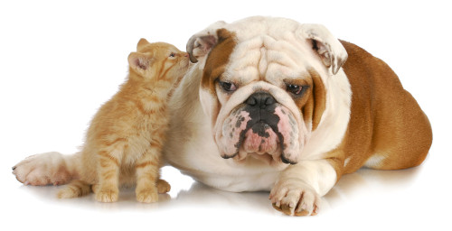 Can Animals Talk?